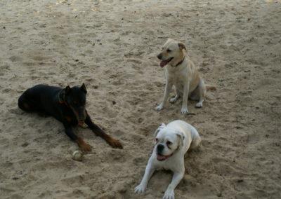Capone, Dotty, Nala
